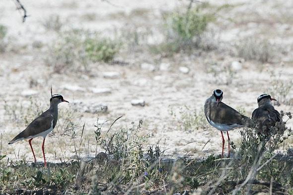 многочисленные околоводные птицы