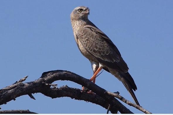 одна из замечательных птиц парка