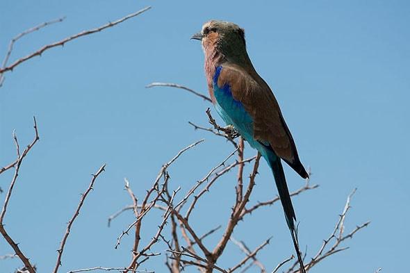 национальный паркт этоша одна из птиц