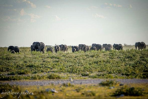 семья слонов мамы и малыши