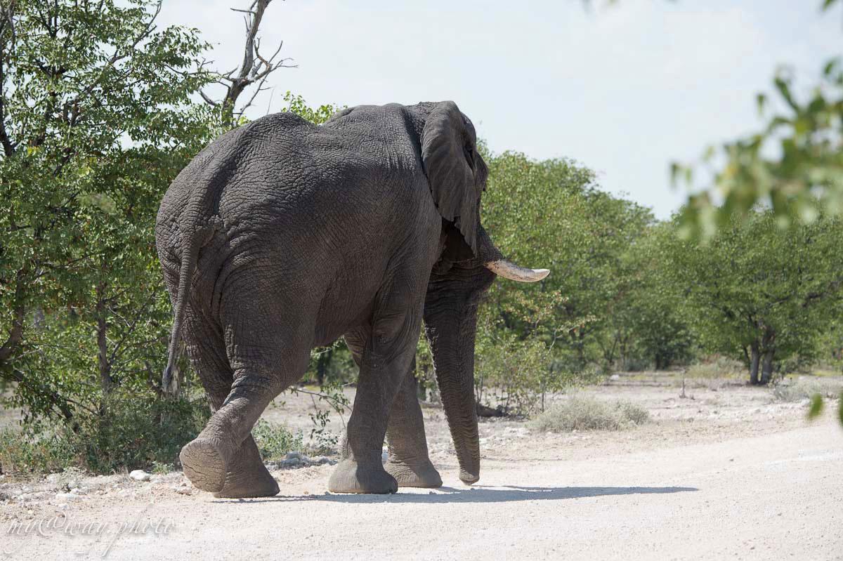 слон серая махина
