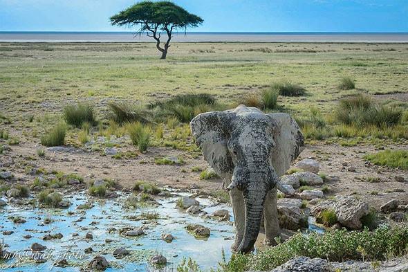 слон  серебряного цвета