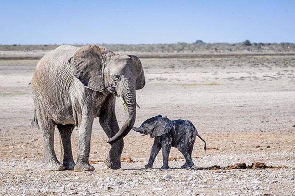 проблема сохранения животных
