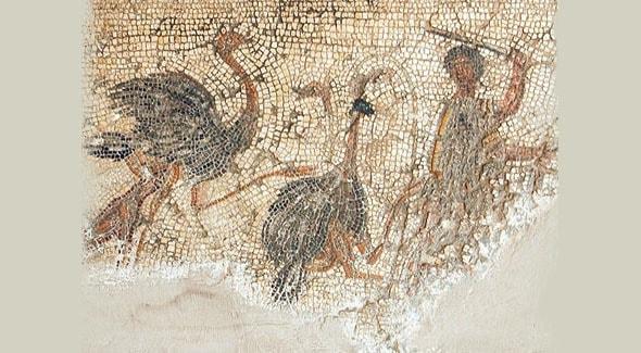 гладиаторские бои на арене экзотические страусы