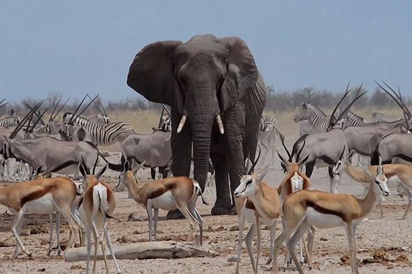 разнообразие животных этоша