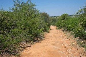 дорога по национальному парку бвабвата