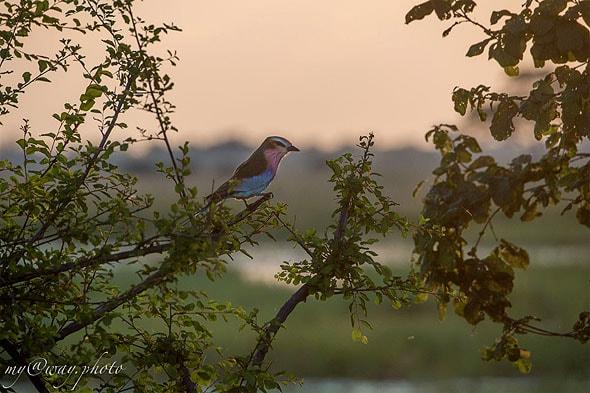 красочные птицы парк бвабвата регион каприви