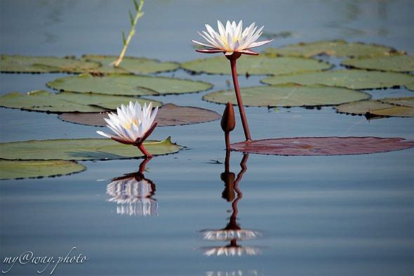 река чобе какие здесь нежные цветы