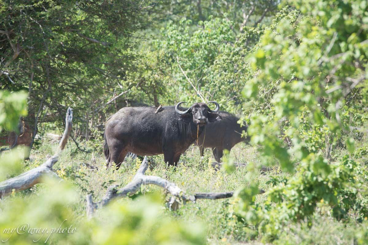 национальный парк бвабвата область буффало