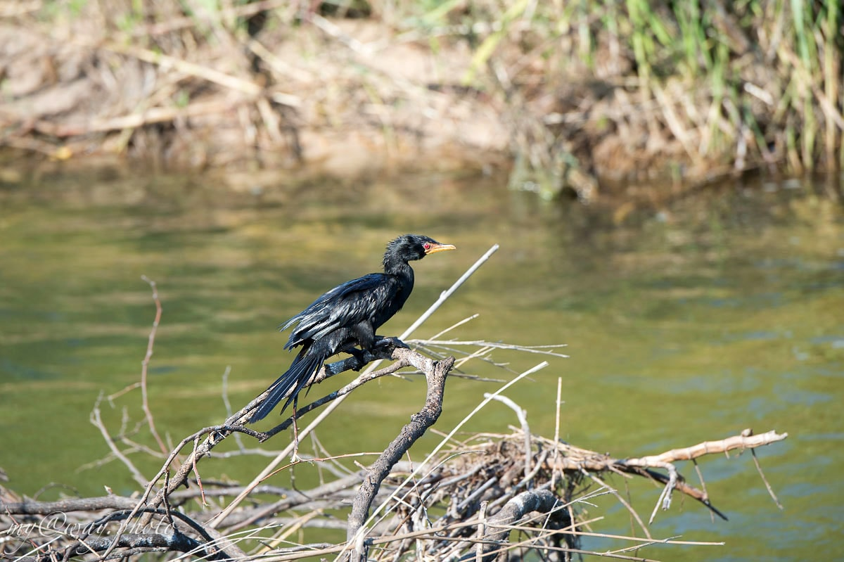птицы в парке бвабвата праздник для бердвочера