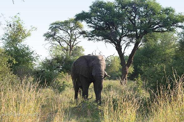 путей миграции слонов
