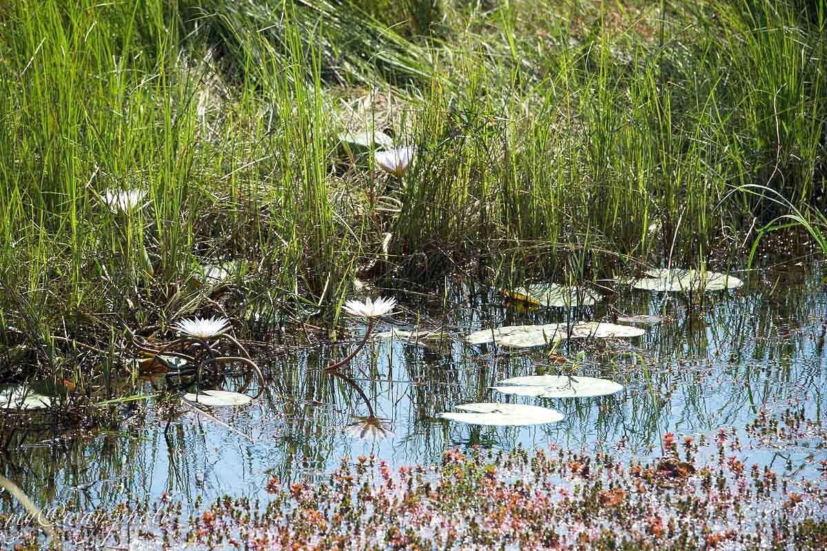 экологически чистый район реки окаванго