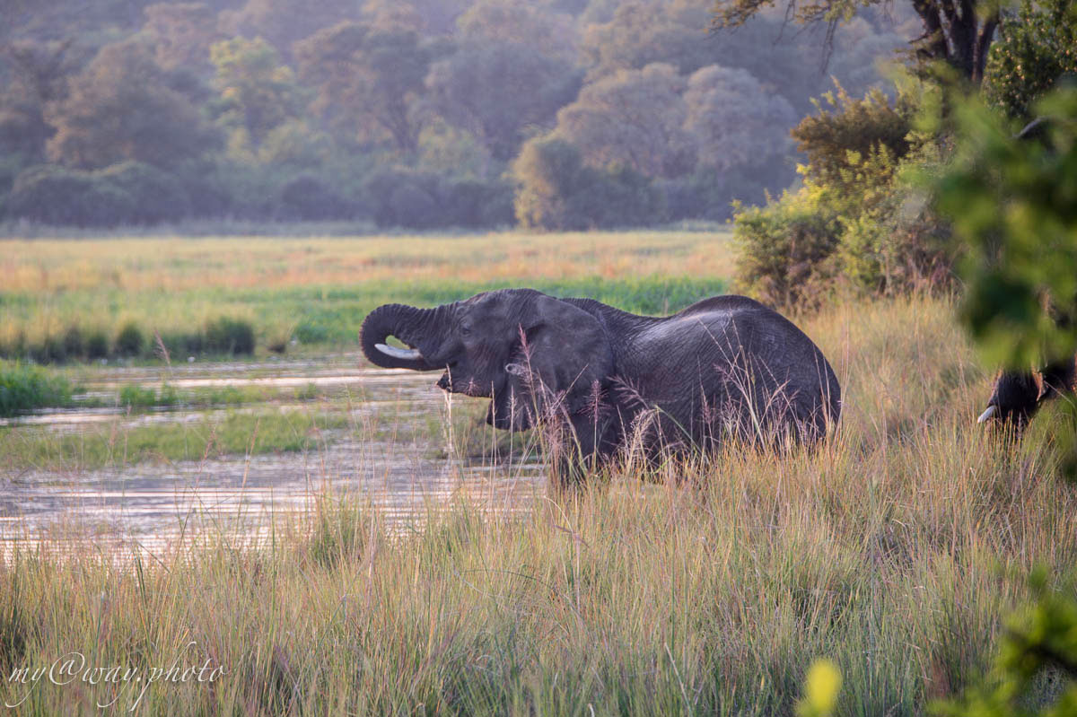 бвабвата слон у реки