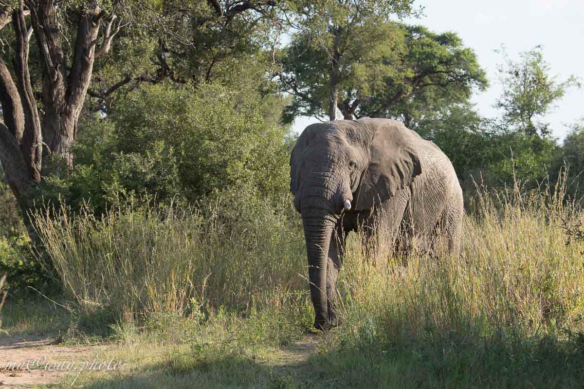 слон в парке бвабвата