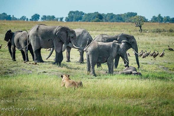 слоны плакали и трогали слоненка