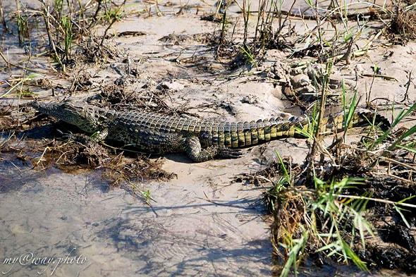 опасная река вода вотчина крокодилов