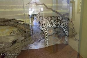 чучело в музее лагеря нособ