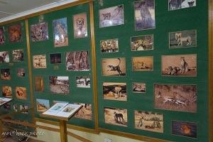 фотографии животных в музее