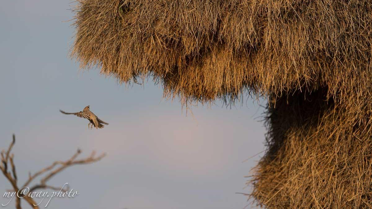 удивительные птички величиной с воробья