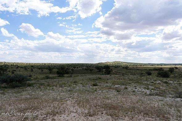 нама бродили как кочевники по пустыне калахари