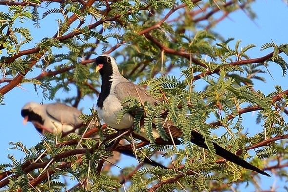 птицы в парке кгалагади