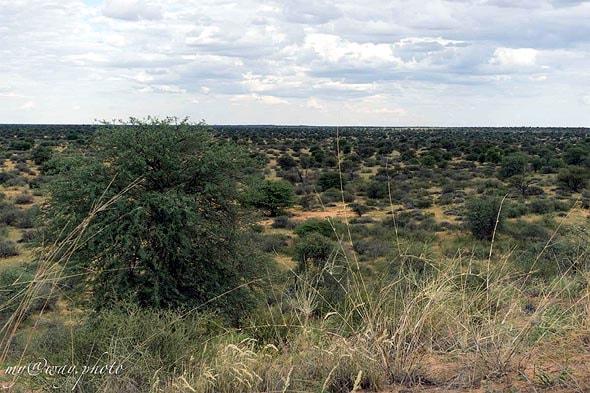 парк кгалагади в южной части пустыни калахари