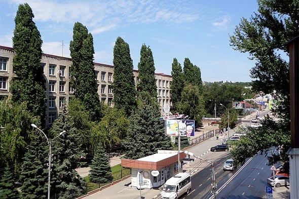 биодренаж деревья с мощной корневой системой усиленно поглощающие влагу