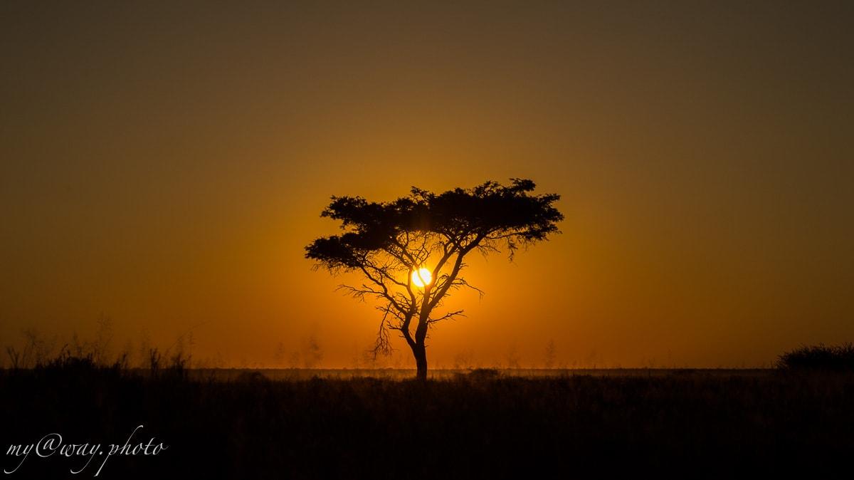 африканская засушливая саванна