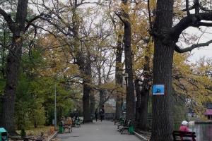 дубовая аллея городской парк саратова