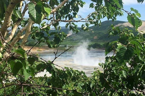 кальдера вулкана узон береза каменная или береза эрмана