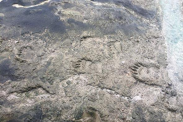 кальдера узон медведи разгуливают по горячей глине