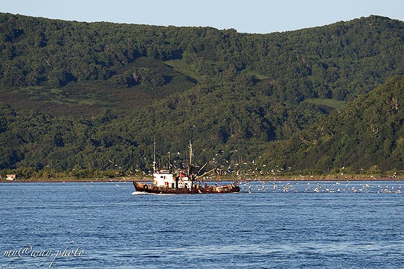 плывем вдоль авачинской бухты