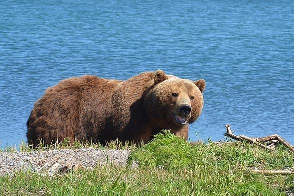 всю ночь в южно камчатский заказнике чудились медведи крадущиеся к палатке
