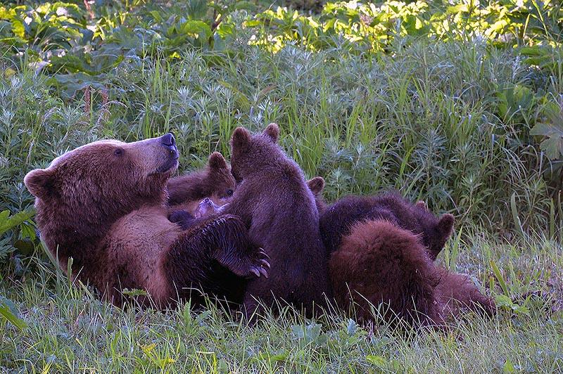 счастливая медвежья семейка