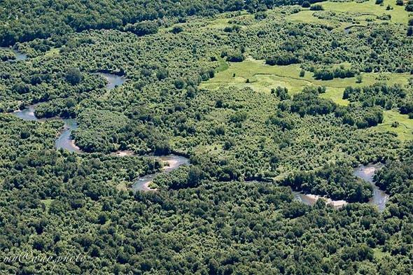 петляющие по лесу ручейки и рукава