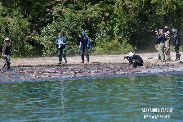 туристы на нересте лосося курильское озеро