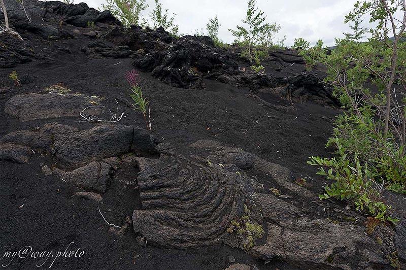 старые лавы плоского толбачика