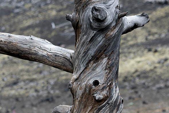 перекрученные давним жаром деревья