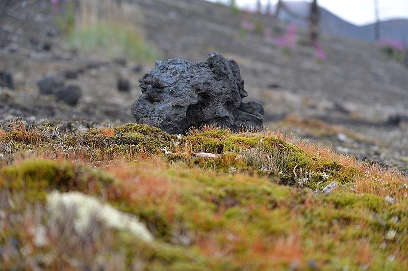 не совсем скуден растительный мир мертвого леса