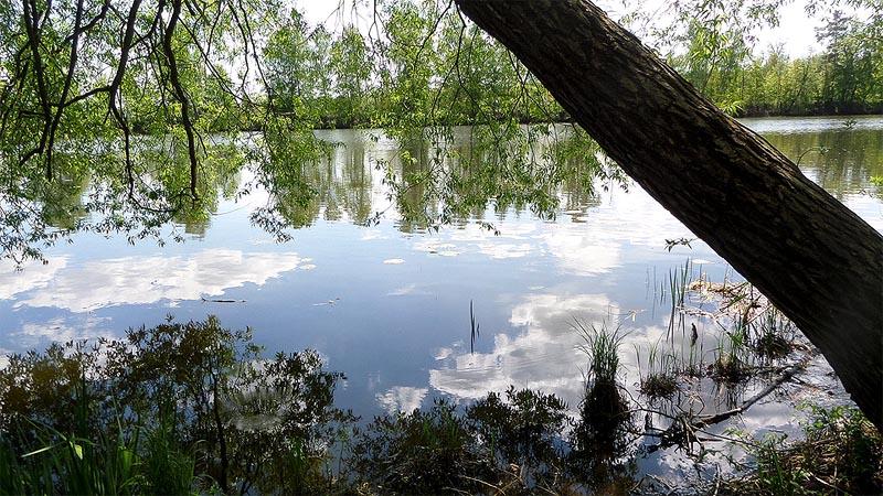 тропинка идет по берегу старицы москва реки