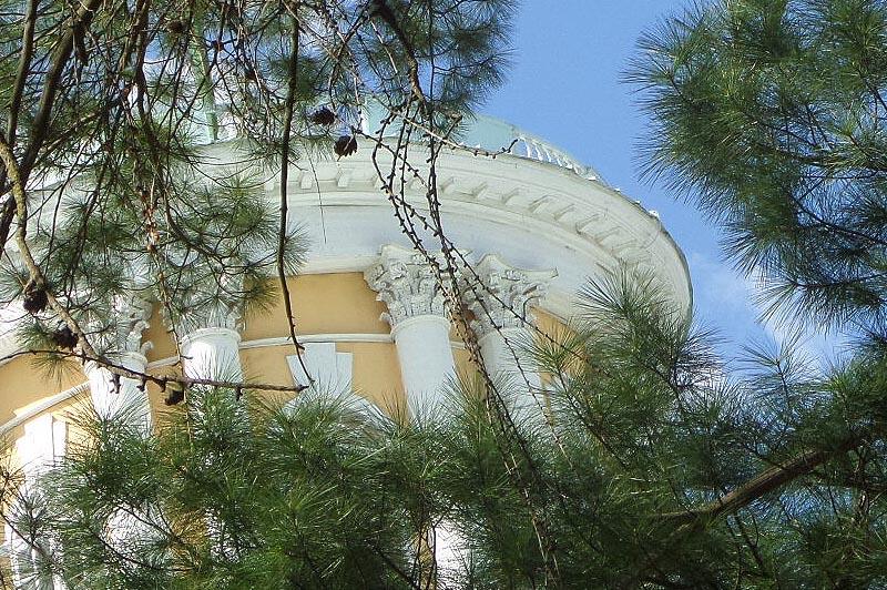 на верхней террасе лиственницы
