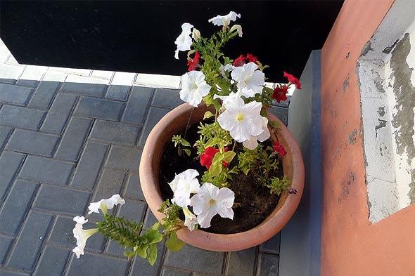 цветы у собора
