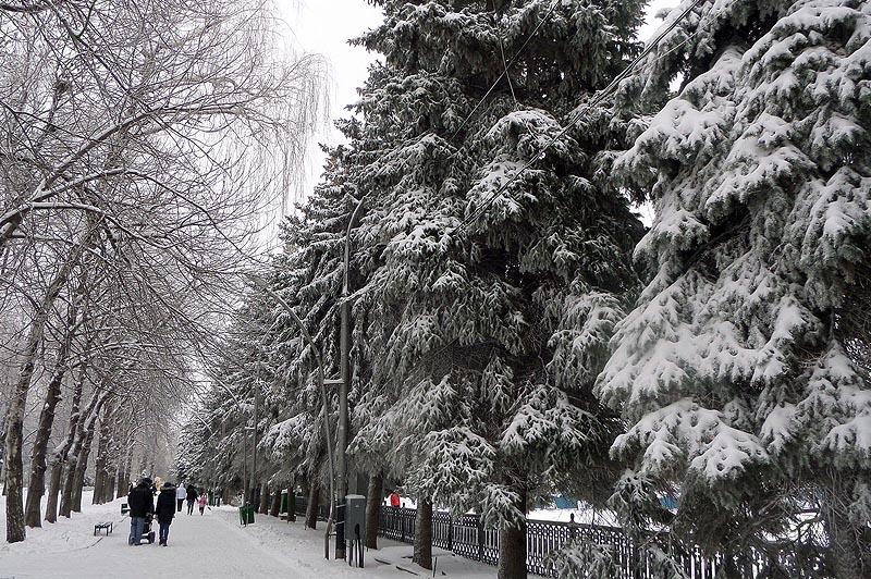 зимняя аллея сквера возле театральной площади саратов