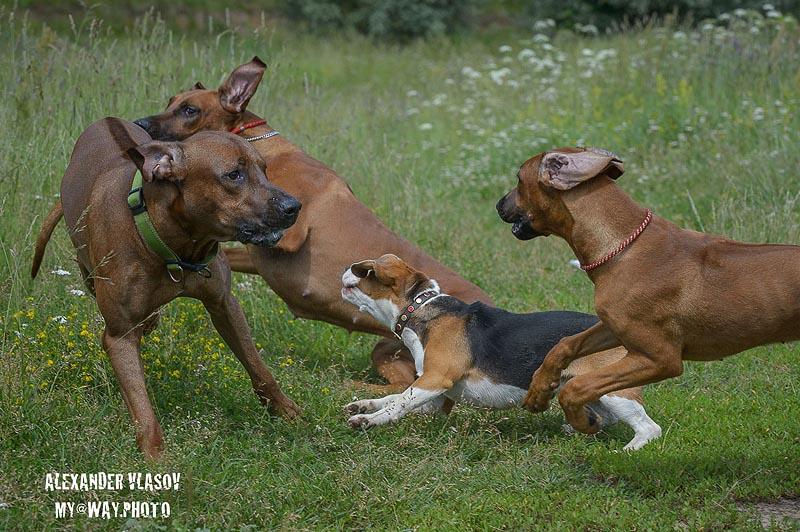 веселье в собачьей компании