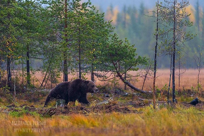 в честь борея бога северного ветра получил название бореальный лес