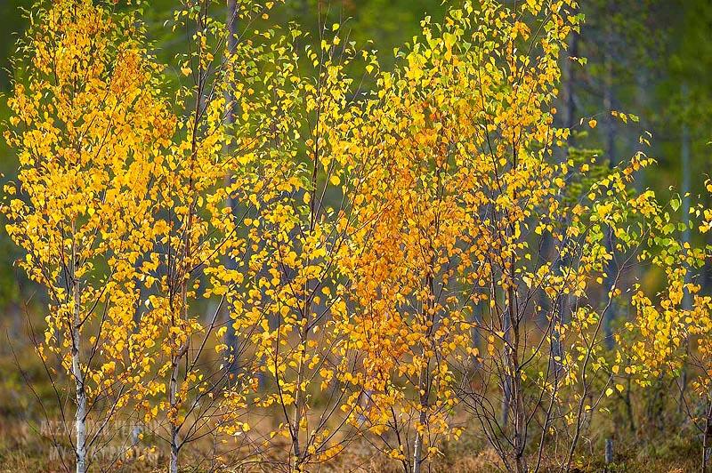 парад прощальной красоты природы финны называют словом руска