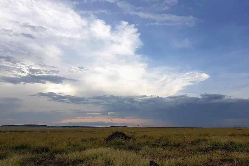 забытые в африканской жаре запахи исходят от влажной земли душистый воздух мары