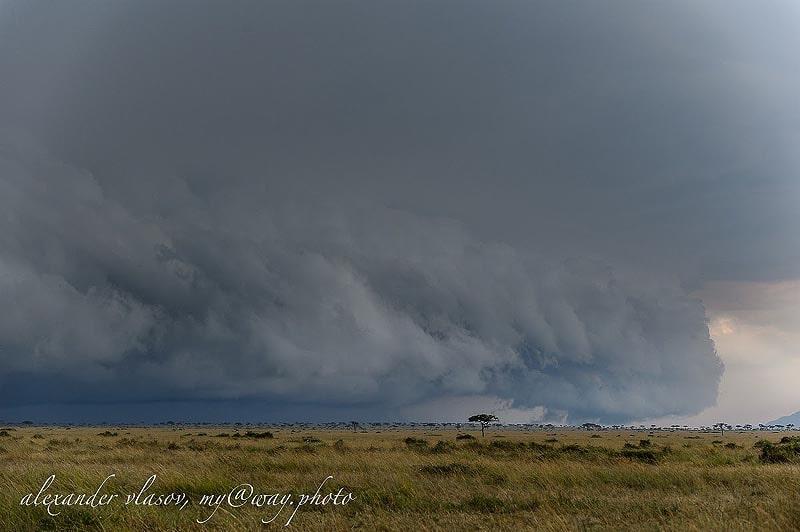 грозовые тучи вот-вот прольются ливнем заповедник масаи мара