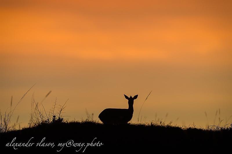 закат как апельсинный сок заповедник масаи мара