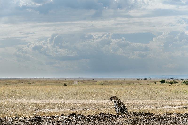 этой большой кошке нравятся каменистые ландшафты